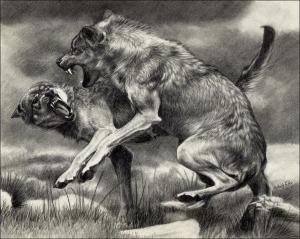 Wolf_Fight