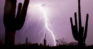 cactus lightening