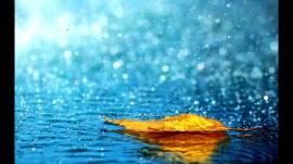gentle rain on a leaf